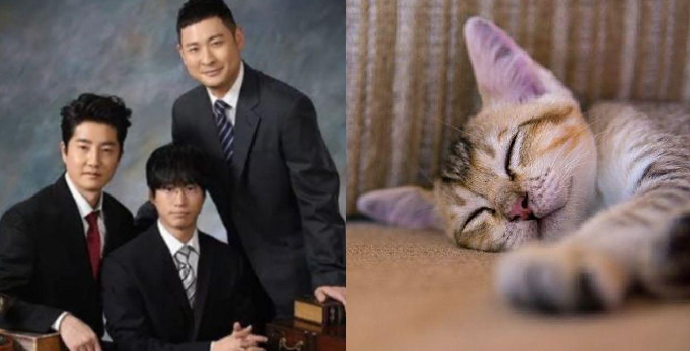 에픽하이 신곡을 들은 전 세계의 고양이들이 잠들고