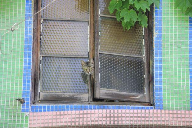 「窓からひょっこり」 投稿名:キウイ母