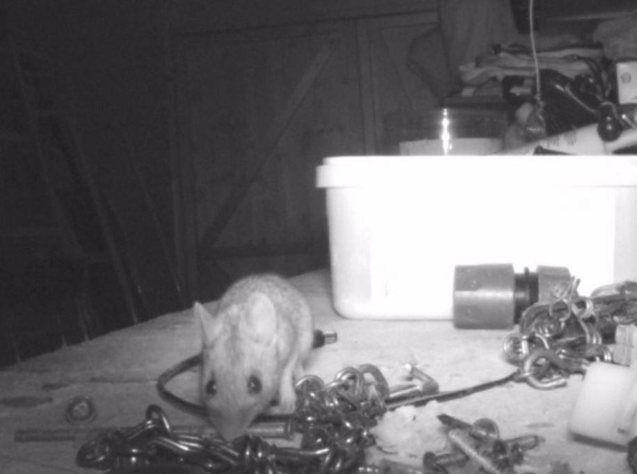 Βρετανία: Ενα ποντικάκι έκανε κάθε βράδυ φασίνα και τρέλανε την