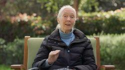 Le message de la célèbre primatologue Jane Goodall pour la Journée de la