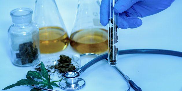Herbal medicine cannabis in