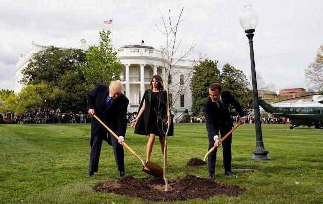 L'arbre planté par Macron et Trump à la Maison Blanche a