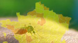Pourquoi vous risquez d'avoir des moustiques chez vous en