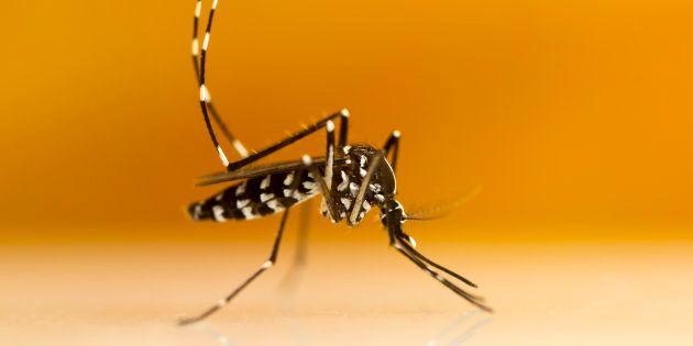Comment éviter la piqûre du moustique tigre