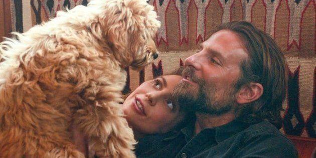 Le chien Charlie entouré Bradley Cooper et Lady Gaga dans le