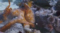Ce documentaire de la BBC vous rappelle à quel point les poulpes sont