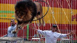 Le cirque Pinder placé en liquidation