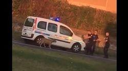 Des policiers municipaux tirent sur un chien perdu en Isère, une pétition réclame des
