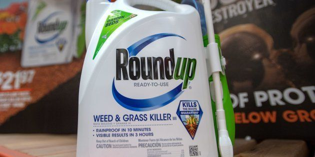 Les dommages et intérêts dus par Monsanto dans le procès du Roundup très largement