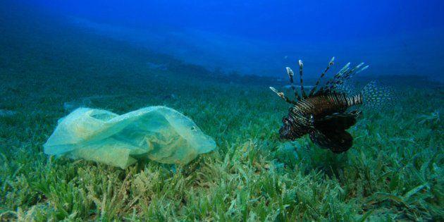 Dans la fosse des Mariannes, un sac plastique retrouvé à presque 11 km de profondeur (photo