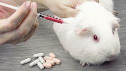 À l'approche du Téléthon, le débat sur l'expérimentation animale fait rage entre chercheurs et