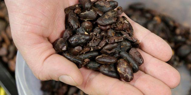 Des traces de cacao ont été découvertes en Équateur sur des poteries, prouvant ainsi que l'homme en consomme depuis plus de 5000 ans (Photo d'illustration).