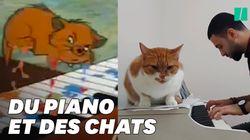 Les chats mélomanes de ce musicien vont vous rappeler un célèbre dessin