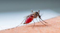 Un bébé de six mois meurt de la dengue en