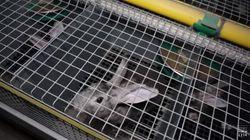 Dior, Dolce & Gabbana... L214 interpelle des marques de luxe sur l'élevage de lapins en