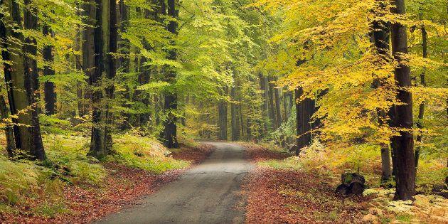 La mairie de Sainte-Ménehould (Marne) interdit la circulation de promeneurs dans la forêt communale les...