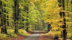 La promenade dans la forêt de cette commune de la Marne interdite les jours de