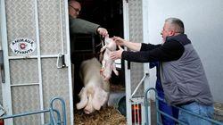 Le gouvernement va étendre le délit de maltraitance animale aux