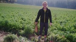 Cet agriculteur s'indigne car ses carottes sont jugées trop