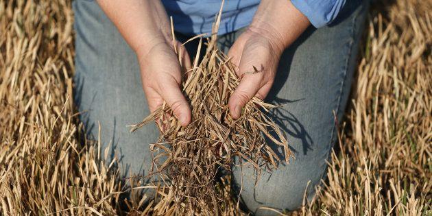 Le réchauffement climatique met en danger nos systèmes agricoles et notre capacité à nourrir une population...