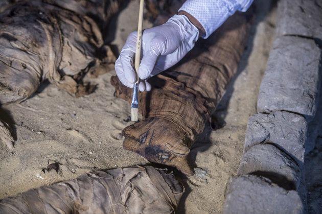 Un archéologue nettoie un chat momifié à Saqqara, le 10
