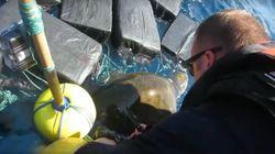 Des garde-côtes sauvent une tortue empêtrée dans 800kg de