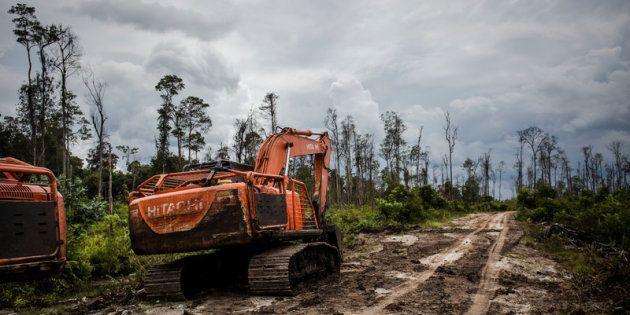 La production d'huile de palme continue de faire des ravages en Indonésie. Ici, des excavatrices sur...