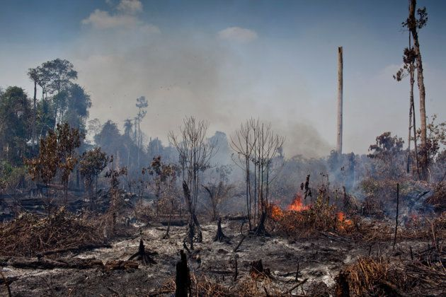 Feux de forêts observés dans la province de Riau, sur l'île de Sumatra, en Indonésie. Ces derniers ont...