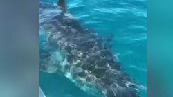 Cernée par un requin de cinq mètres, cette famille a vécu un vrai