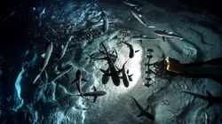 Ils ont plongé avec 700 requins, la nuit, et voici ce qu'ils ont