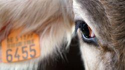 BLOG - Comment les députés ont complètement mis de côté la sensibilité animale dans leur projet de