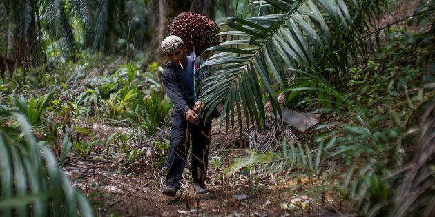 Une huile de palme 'durable' comme l'affirme Total, c'est possible
