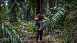 Une huile de palme