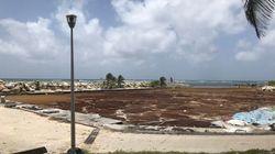 Le gouvernement annonce un plan à 10 millions d'euros pour débarrasser les Antilles des algues