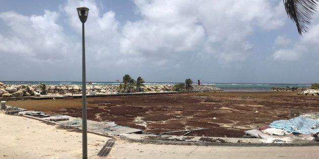 Les plages de Guadeloupe, des îles du Sud et de Martinique sont envahies par les algues depuis plusieurs