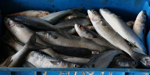 Un vote sur la pêche électrique dans l'Union Européenneest prévu le mardi16janvier au Parlement.