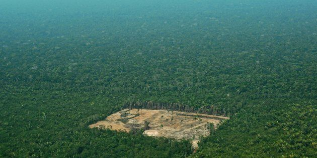 Au Brésil, chaque année la surface déboisée gagne du terrain