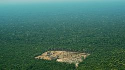 Des millions de signatures pour une pétition voulant sauver la forêt