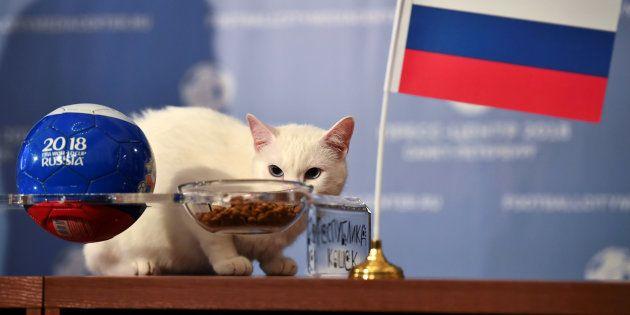 Achille le chat prévoit une victoire de la Russie pour le match d'ouverture du Mondial le 14 juin