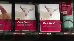 Acheter une chèvre dans un distributeur, c'est