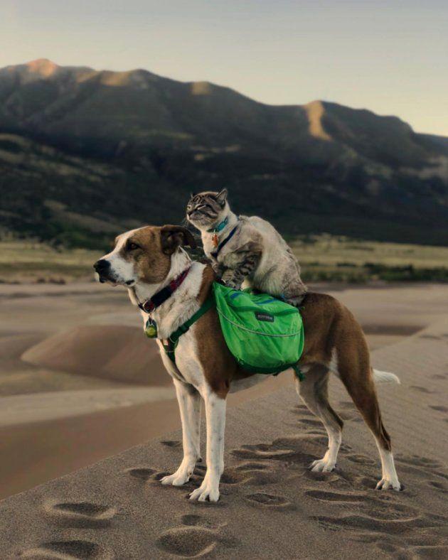 Le couple a adopté Henry au foyer Rocky Mountain Puppy Rescue en 2014, lorsqu'il avait trois mois. En 2017, ils ont adopté Baloo au sanctuaire pour chats Evergreen, alors qu'il n'avait pas encore trois mois.