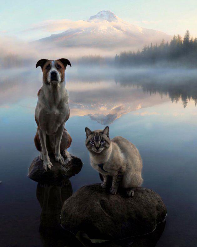 Henry et Baloo posent sur des pierres en pleine nature.