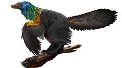 Ce dinosaure avait des plumes arc en