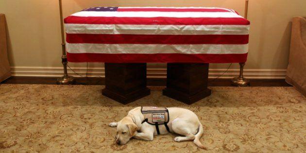 Sully, le labrador qui aidait George Bush à se