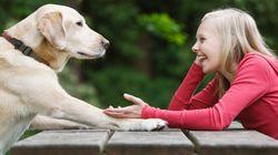 Des chiens pour accompagner les enfants diabétiques, une première en