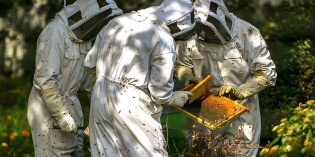 Ces apiculteurs veulent comprendre comment du glyphosate a atterri dans leur