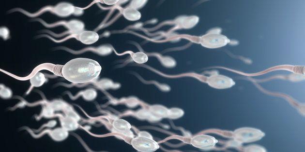 Meilleure qualité de sperme en mangeant des noix? Des chercheurs nous le démontrent dans une étude