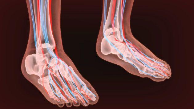 Schéma d'artères et de vaisseaux lymphatiques de deux pieds