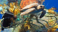 Seuls 13% des océans de la planète peuvent encore être considérés comme