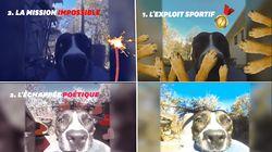 Ce chien, voleur de GoPro, est devenu une